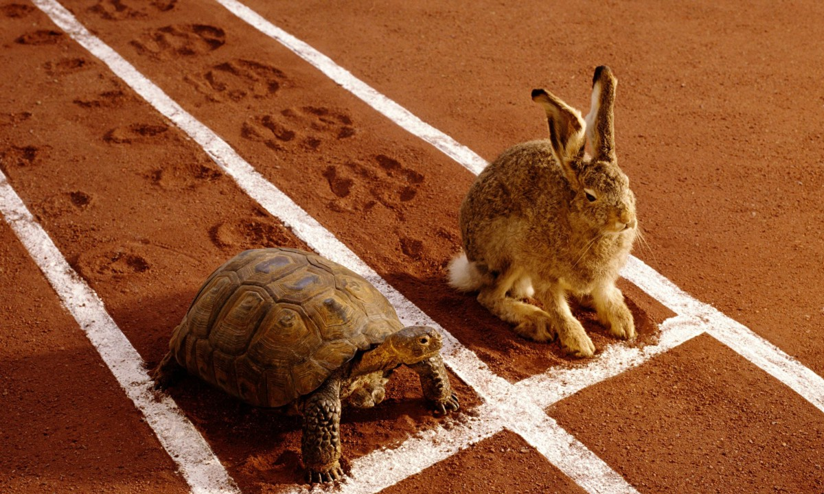 travel-better-tortoise-vs-hare